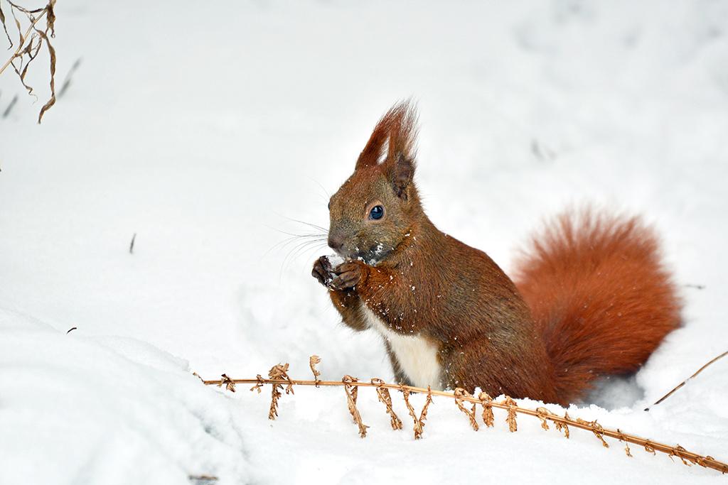 Weihnachten Im Schnee Besetzung